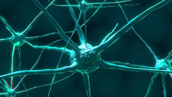 Cerebro humano flexible