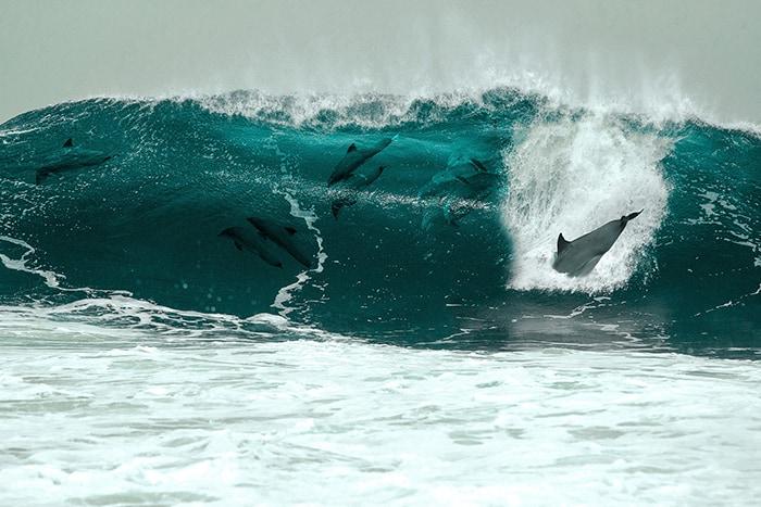 Virus delfines en Brasil