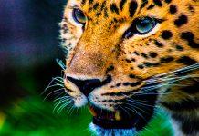 Día Internacional de la Diversidad Biológica 2018