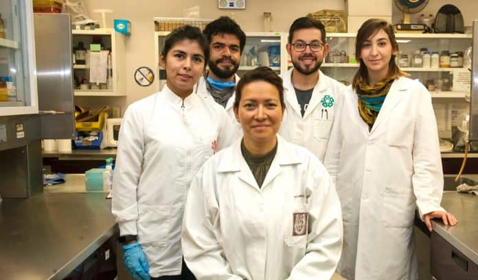 Científicos del IPN crean terapia que elimina el virus del papiloma humano