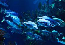 Día Mundial de la Vida Silvestre 2019, conservando la vida subacuática