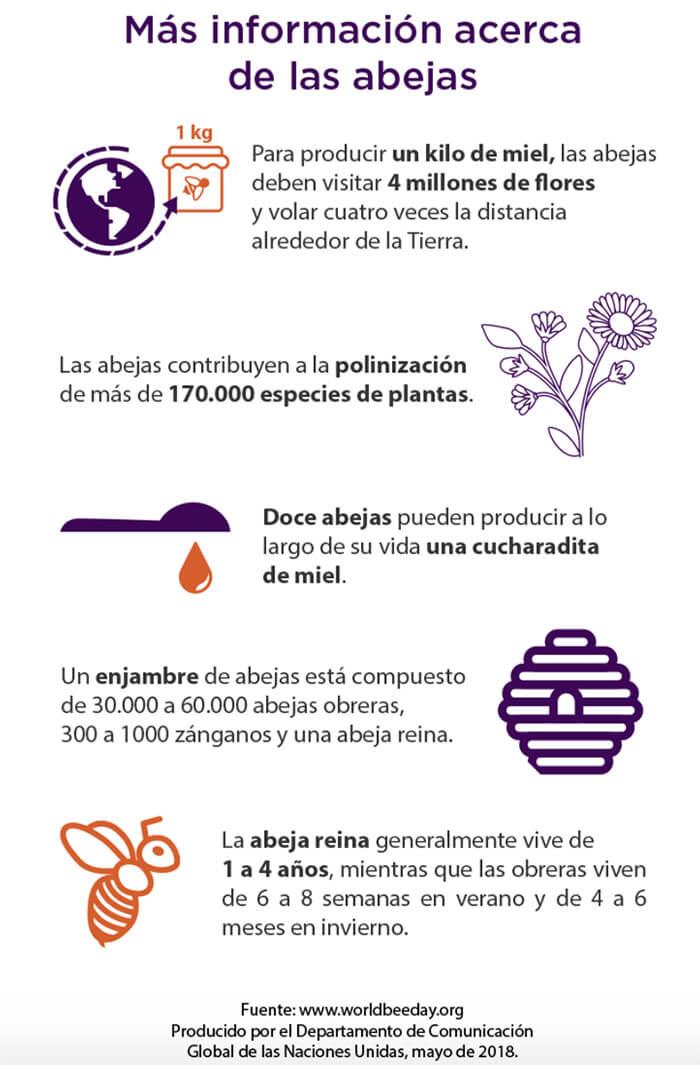 Día Mundial de las Abejas, cuidemos a los polinizadores