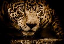 Un millón de especies en peligro de extinción ONU