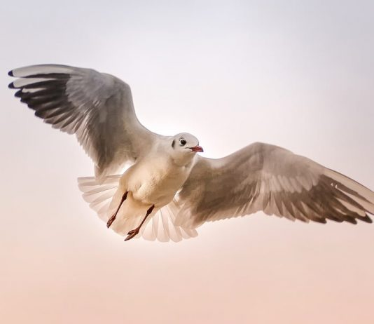Día Mundial de las Aves Migratorias 2019