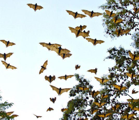 Estudiantes del IPN investigan nuevos virus de murciélagos